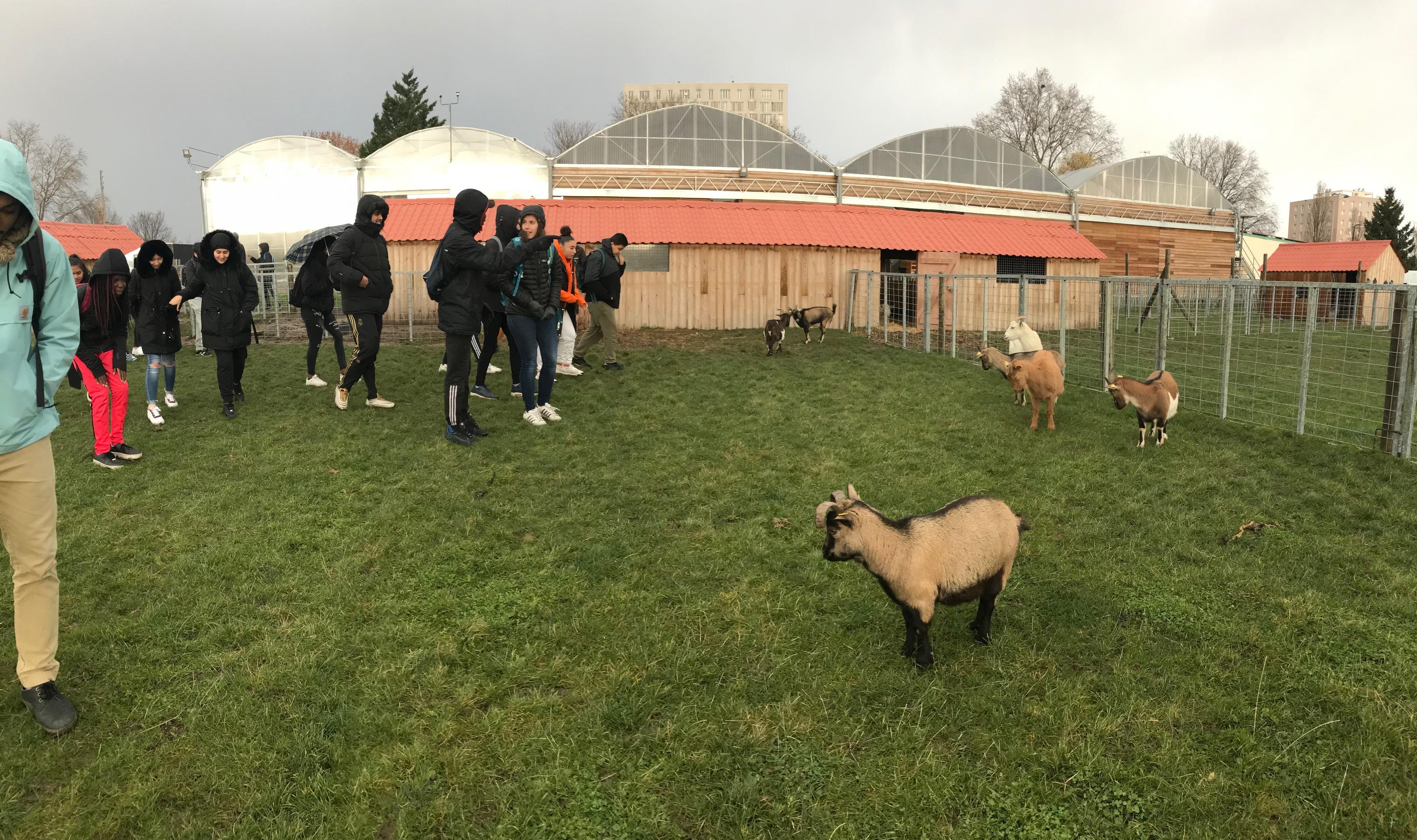Visite de la ferme urbaine de Saint Denis avec les 2ndes 7 et 8